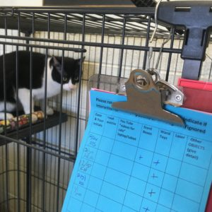 Evanston officials eye County grant for construction of new animal shelter